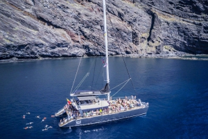 Costa Adeje: Masca and Los Gigantes Whale Watching Cruise