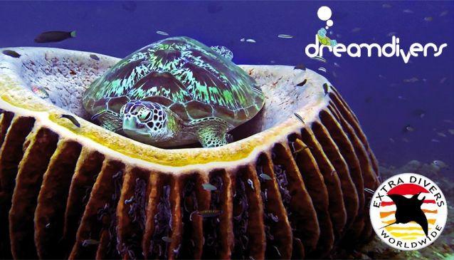 Dream Divers - Gili Trawangan