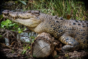 From Miami: Half-Day Everglades Airboat Ride & Wildlife Show