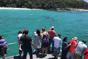 Jervis Bay: 1.5-Hour Dolphin Cruise