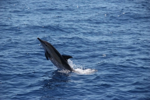 Madeira: Dolphin and Whale Watching Tour from Funchal