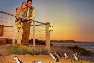 Phillip Island: Penguins, Kangaroos, and Koalas