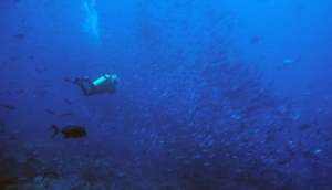 Reef Seekers Dive Centre