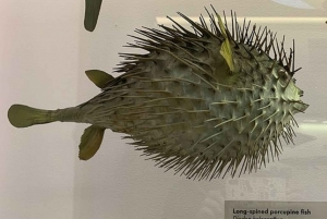 London: Family-Friendly Natural History Museum Tour