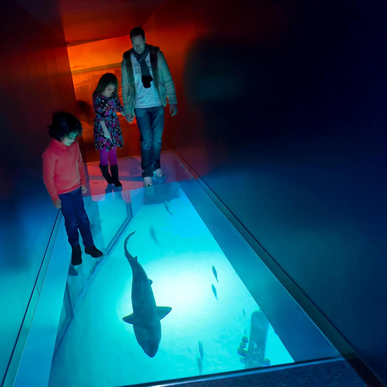 sea life london aquarium 315760