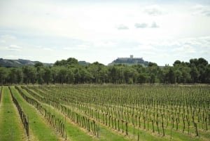 From Madrid: Ribera del Duero Tour of 3 Different Wineries