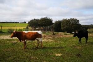 Half-Day Bull Breeding Farm Tour