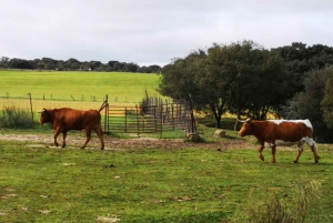 Madrid: Half-Day Bull Breeding Farm Tour