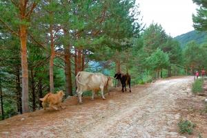 Madrid: Mountain Biking Day Trip