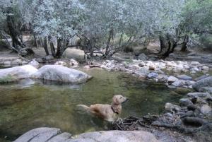 Sierra de Guadarrama Hiking Day Trip