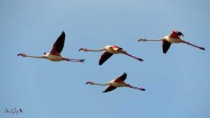 Birdaytrip