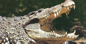 Crocodile Park Torremolinos