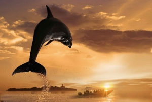 Alcudia: 3-Hour Coast & Dolphins Small Group Cruise