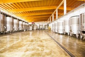 Bodegas Vi Rei: Vineyard and Train Tour with Wine Tasting