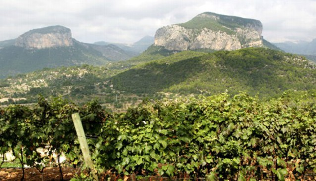 Castell Miquel Wine Estate In Mallorca My Guide Mallorca