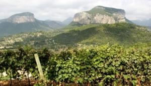 Castell Miquel Wine Estate