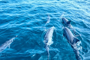 Dolphin Watching Glass Bottom Boat Tour