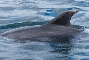 Glass-Bottom Dolphin Watching Boat Tour with Lunch