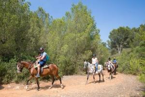 Mallorca: 2-Hour Mountain Horse Riding Experience