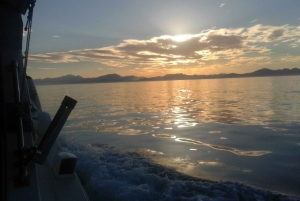 Mallorca: Half–Day Boat Excursion with Lunch