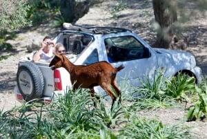 Mallorca: Jeep Excursion of Sierra de Tramuntana with Pickup