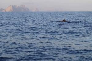 Mallorca: Sunrise At Sea & Dolphin Watching Tour