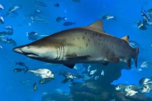 Palma de Full-Day Aquarium Tour