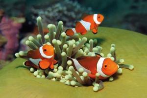 Palma de Mallorca: Full-Day Aquarium Tour