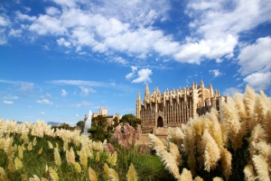 Palma Private Guided Walking Tour
