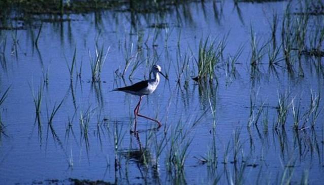 S'Albufereta Nature Reserve