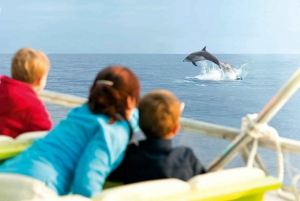 Sunrise At Sea & Dolphin Watching Tour