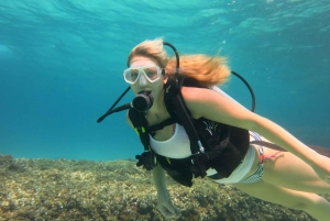 Try Scuba Diving in a Beautiful Nature Reserve