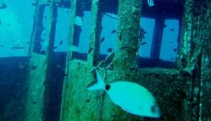 Corsair Diving