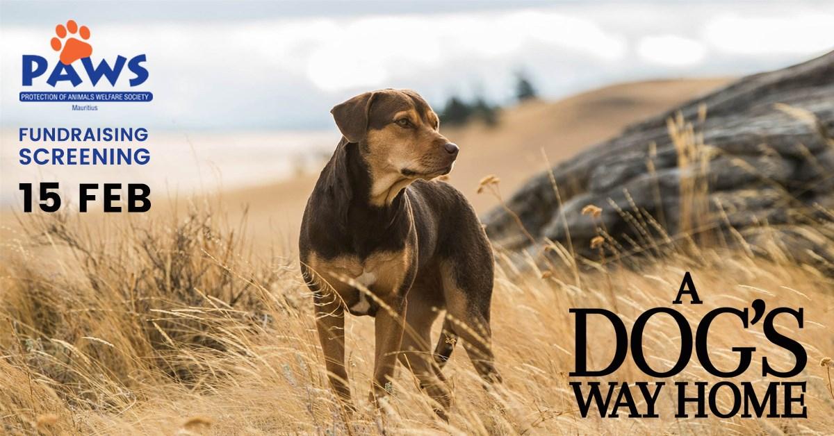 A Dog's Way Home - Cine sous les Étoiles