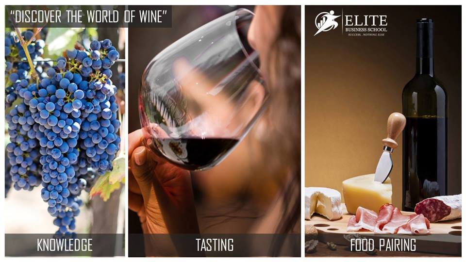 Discover the World of Wine