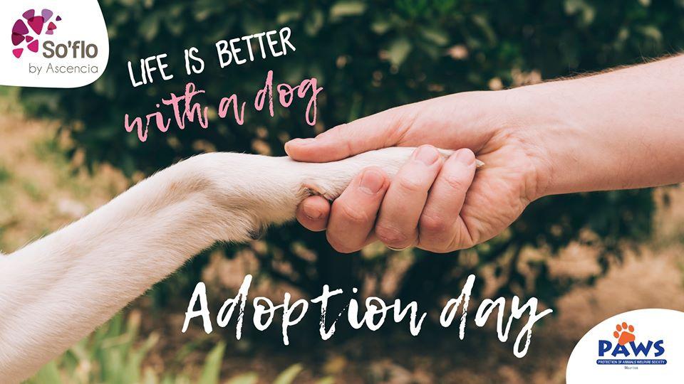 PAWS Adoption Day at So'flo