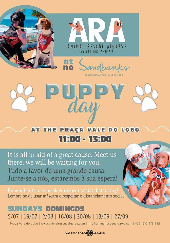 ARA Puppy Day at Sandbanks