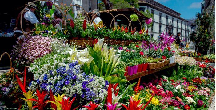 Madeira Flower and Wine Festivals