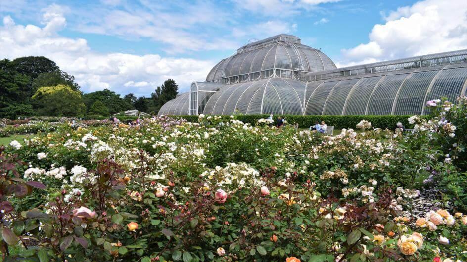 Virtual Kew