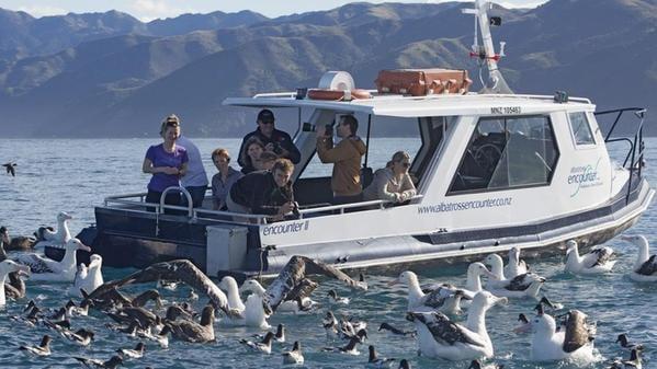 Albatross Encounters Kaikoura