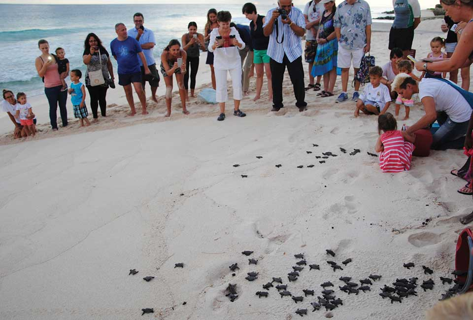 People watching turtle hatchlings on the beach