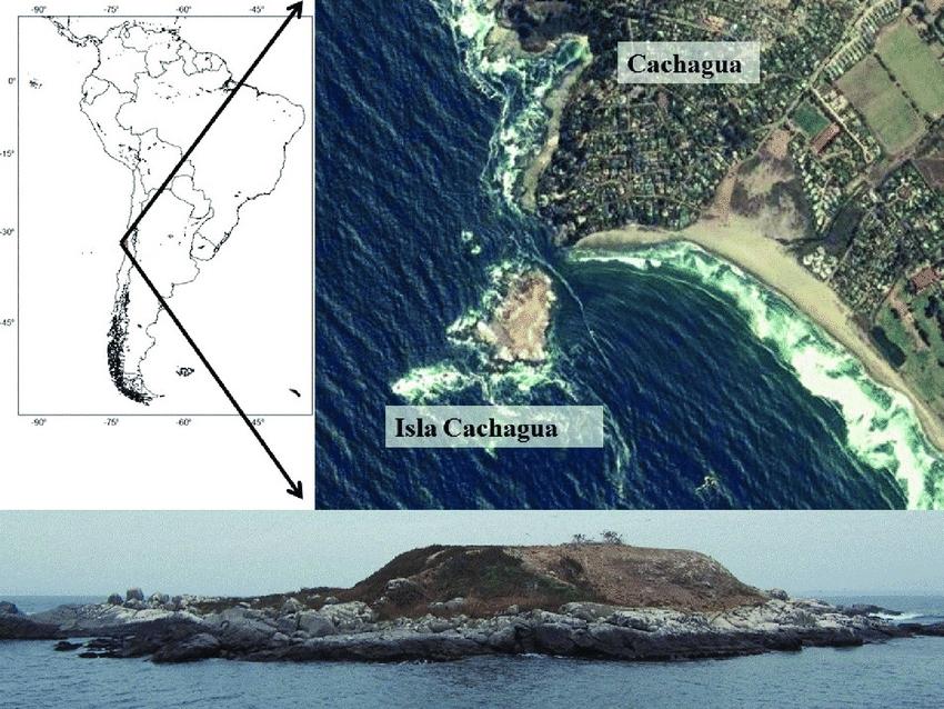 Cachagua Island Map