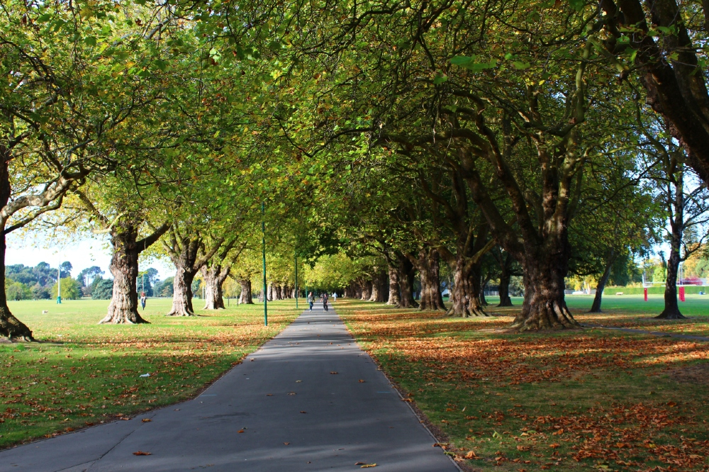 Best Christchurch Walks