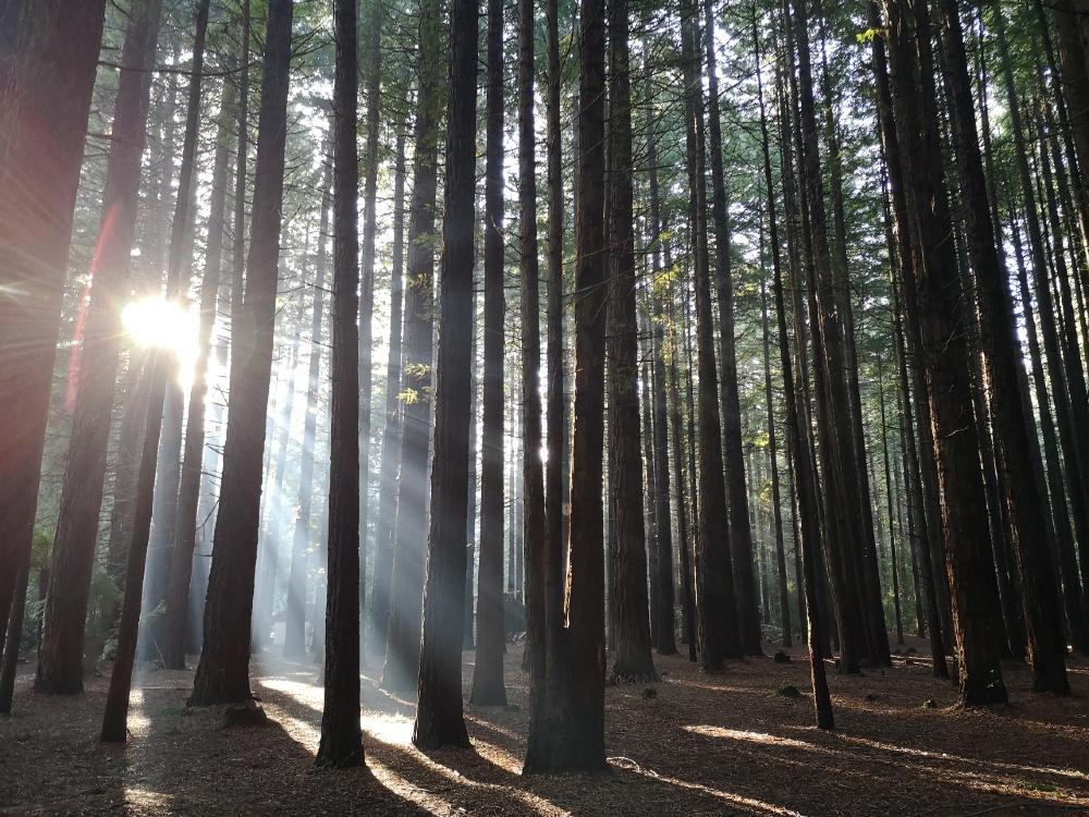 Rotorua Redwoods Walks