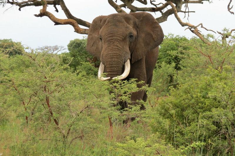 Top Five Zimbabwe Destinations For Ecotourism
