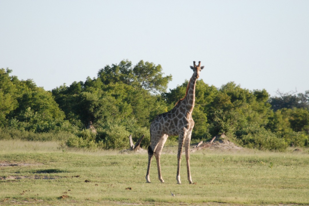 Unforgettable Moments At Zimbabwe National Parks