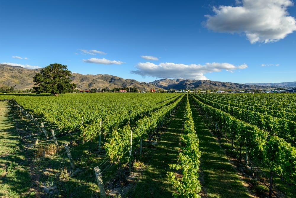 Walking the 4 Barrels Wine Trail