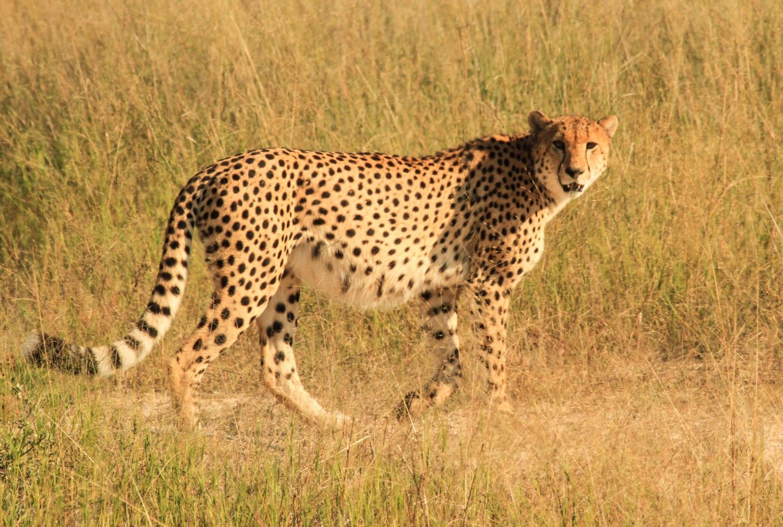 Zimbabwe's Top Five Safari Destinations