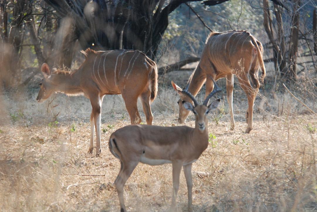 Zimbabwe Safari Myths Debunked
