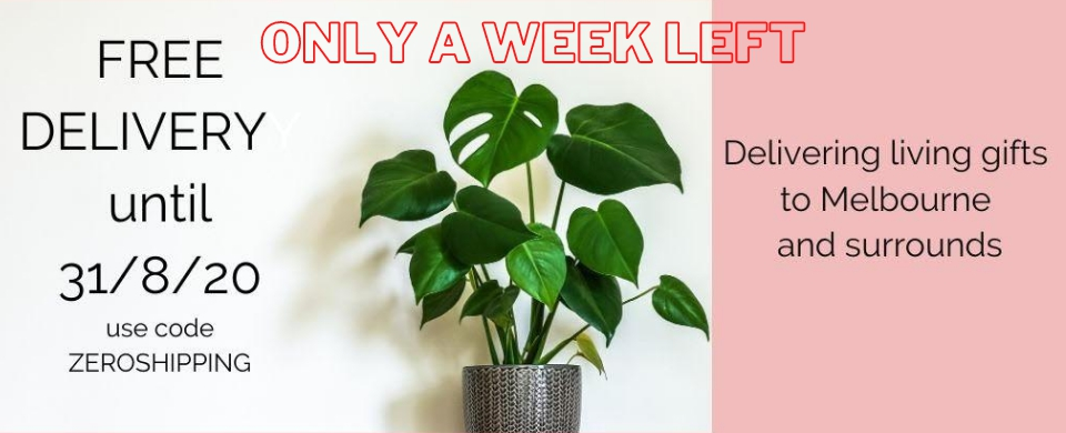 The Indoor Plant Co - FREE DELIVERY ACROSS MELBOURNE